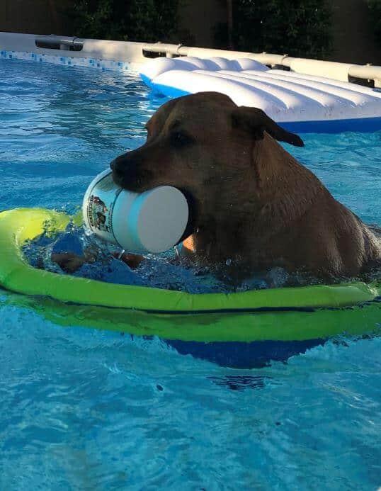 Kirra Enjoys New Life After Yeast Problem