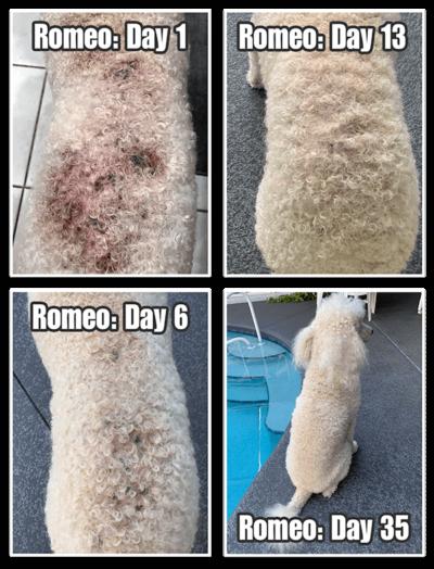 Dog Shampoo results